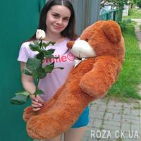 Buy a big Teddy bear 1.2 m - Photo 2