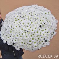 Огромный букет хризантем - Фото 1
