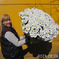 Large bouquet of 51 white camomile chrysanthemum - Photo 1
