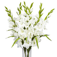 White gladioli in bouquet - flowers and bouquets on roza.ck.ua