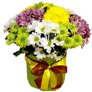 Chrysanthemums in a box - flowers and bouquets on roza.ck.ua
