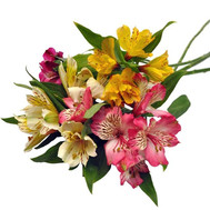 """A small bouquet of alstroemerias"" in the online flower shop roza.ck.ua"