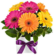 """Mini-bouquet of gerberas in a box"" in the online flower shop roza.ck.ua"