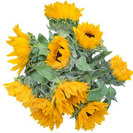 Sunflowers in a bouquet - flowers and bouquets on roza.ck.ua