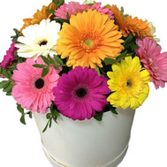 A beautiful bouquet of gerberas in a box - flowers and bouquets on roza.ck.ua