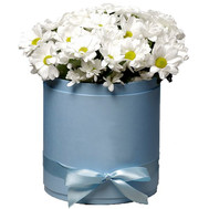 """Chamomile chrysanthemums in a box"" in the online flower shop roza.ck.ua"