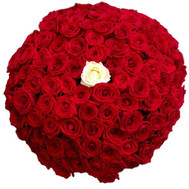 """100 red roses with one white"" in the online flower shop roza.ck.ua"