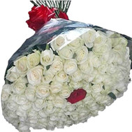 """Bouquet of 100 white roses and 1 red"" in the online flower shop roza.ck.ua"