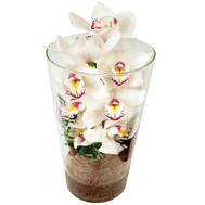 White Cymbidium in Glass - flowers and bouquets on roza.ck.ua
