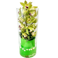 Green orchid Cymbidium in a glass vase - flowers and bouquets on roza.ck.ua