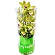 Зеленая ветка орхидеи в вазе - цветы и букеты на roza.ck.ua