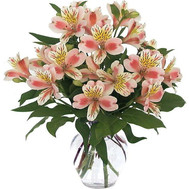 Buy Alstroemeria Cherkasy - flowers and bouquets on roza.ck.ua