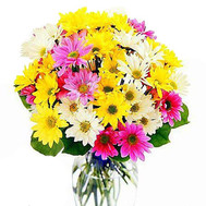 Buy chrysanthemums Cherkassy - flowers and bouquets on roza.ck.ua