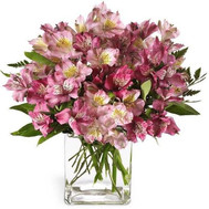 Pink Alstroemeria - flowers and bouquets on roza.ck.ua