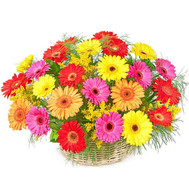 Basket of gerberas - flowers and bouquets on roza.ck.ua