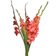 5 gladioli in bouquet - flowers and bouquets on roza.ck.ua