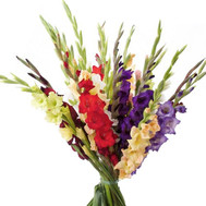 Bouquet of gladiolus - flowers and bouquets on roza.ck.ua