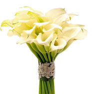 25 callas in bouquet - flowers and bouquets on roza.ck.ua