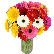 31 multi-colored gerberas - flowers and bouquets on roza.ck.ua