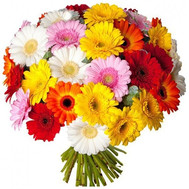 Large bouquet of 51 gerberas - flowers and bouquets on roza.ck.ua