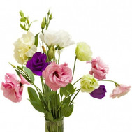 Bouquet of 5 eustoma - flowers and bouquets on roza.ck.ua