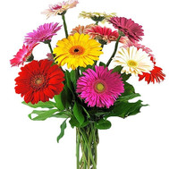 """Buy a bouquet of gerberas of Cherkassy"" in the online flower shop roza.ck.ua"