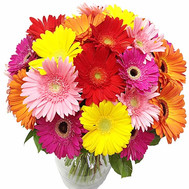 Chic bouquet of 35 gerberas - flowers and bouquets on roza.ck.ua