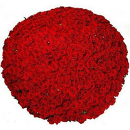 1001 rose in bouquets - flowers and bouquets on roza.ck.ua