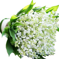 Large bouquet of lilies of the valley - flowers and bouquets on roza.ck.ua