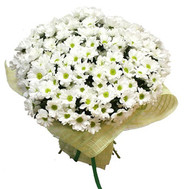 Large bouquet of chamomile chrysanthemums - flowers and bouquets on roza.ck.ua