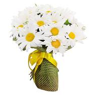 Букет из 35 ромашек - цветы и букеты на roza.ck.ua