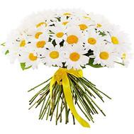 Букет из 51 ромашки - цветы и букеты на roza.ck.ua