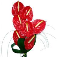 """Bouquet of anthurium"" in the online flower shop roza.ck.ua"