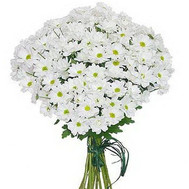 Bouquet of chamomile chrysanthemums - flowers and bouquets on roza.ck.ua