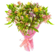 Buy Alstroemerias - flowers and bouquets on roza.ck.ua