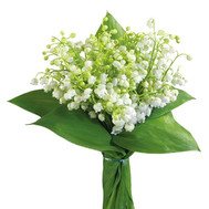 Lilies of the Valley - flowers and bouquets on roza.ck.ua