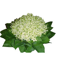 A huge bouquet of lilies of the valley - flowers and bouquets on roza.ck.ua