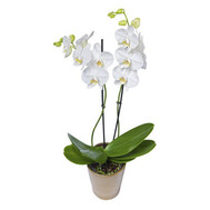 """White Orchid"" in the online flower shop roza.ck.ua"