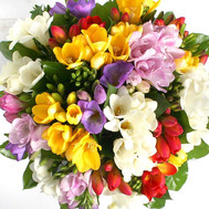 An attractive bouquet of freesias - flowers and bouquets on roza.ck.ua