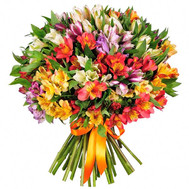 Large bouquet of alstroemerias - flowers and bouquets on roza.ck.ua