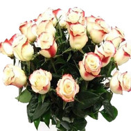 Two-color imported roses - flowers and bouquets on roza.ck.ua