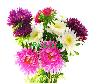 """Bouquet aster"" in the online flower shop roza.ck.ua"