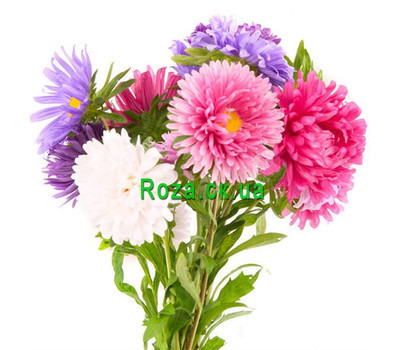 """A small bouquet of asters"" in the online flower shop roza.ck.ua"