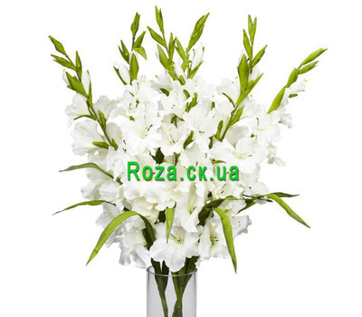 """White gladioli in bouquet"" in the online flower shop roza.ck.ua"