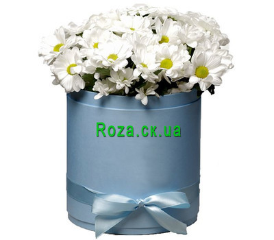 """""""Chamomile chrysanthemums in a box"""" in the online flower shop roza.ck.ua"""