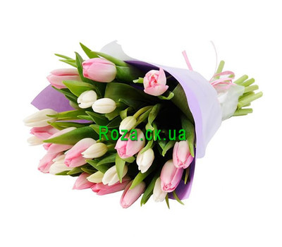 """25 white and pink tulips"" in the online flower shop roza.ck.ua"