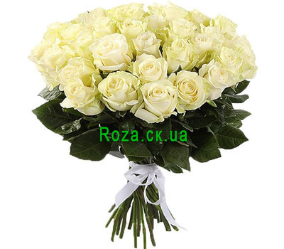 """31 white imported rose"" in the online flower shop roza.ck.ua"