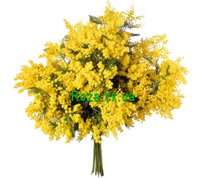 """Mimosa bouquet on March 8"" in the online flower shop roza.ck.ua"