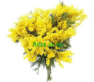 """Beautiful bouquet of mimosa"" in the online flower shop roza.ck.ua"