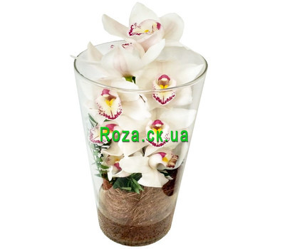 """White Cymbidium in Glass"" in the online flower shop roza.ck.ua"